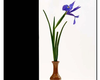 Iris Flower Art Still Life Art