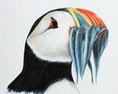 Puffin Portrait - original artwork in watercolour