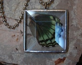 Real Butterfly Wing Pendant Necklace in Square Beveled Glass