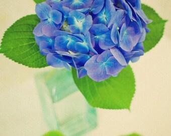 Hydrangea - 5 x 7 Fine Art Photograph - blue green flower floral shabby chic garden summer home decor print