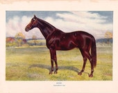 Horse - Antique Color Plate from 1906 Encyclopedia