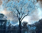 Nature Photography, Dreamy Blue Nature Trees, Surreal Blue Fantasy Nature, Blue Trees Landscape Nature, Surreal Blue Tree Nature Photograph