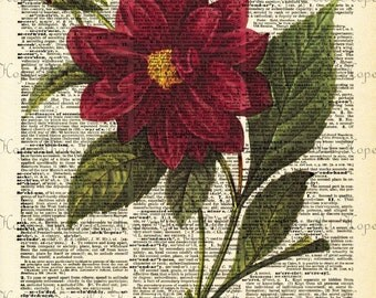 Red Botanical Dictionary Digital Collage Sheet image transfer wall decor greeting cards paper supplies printable art - U Print sh63