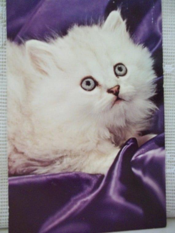 Fuzzy White Kitten on Purple Silk - Vintage Cat Postcard - 1968