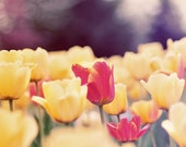 Nature Photography, Tulip Photograph, Spring Home Decor, Flower Photo, Yellow Tulips, Fine Art Print, Nursery Decor