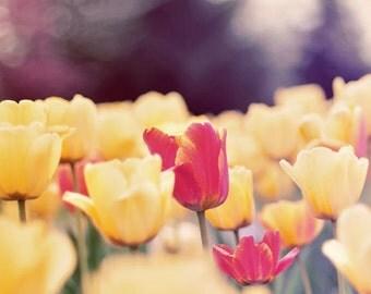 Nature Photography, Tulip Photograph, Spring Home Decor, Flower Photo, Yellow Tulips, Fine Art Print, Nursery Decor