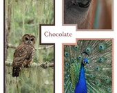 Line Sheet or Wholesale Catalog template for marketing and promotion- Chocolate design, 3 pages