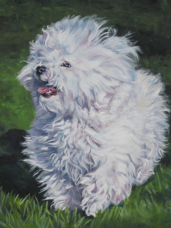 Bichon Bolognese Art Canvas Print Of La Shepard Painting 8x10