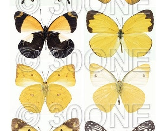 Large Yellow Butterflies - Collage Sheet - A4 Digital Collage Sheet - For unlimited number of prints