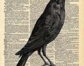 Vintage Book Art - Crow Print - Natural History Bird Art Print - Upcycled Antique Book Print - Spooky Gothic Bird Print