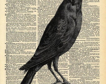 Vintage Book Art - Crow Print - Natural History Bird Art Print - Upcycled Antique Book Print - Spooky Gothic Bird Print