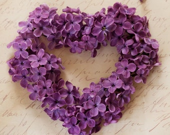 Valentine Photograph - Valentines Day, Floral Heart Photo, Romantic Purple Lilac Blossom Photograph, Home Decor, Large Wall Art