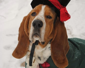Christmas Caroler Dog Cat Pet Costume Hat by MattiOnline on Etsy CUSTOM Hat only