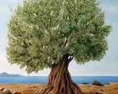 Olive Tree  -  Fine Art Print