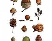 Acorns Watercolor Painting Print 5x7
