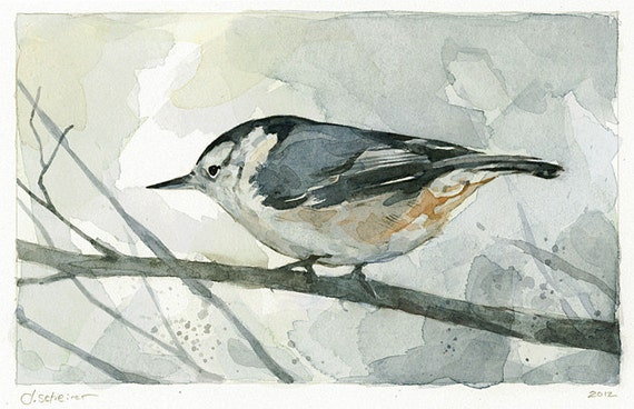 Nuthatch Watercolor Painting Bird Print - limited edition