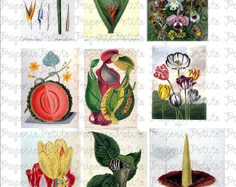 Bright Botanical Flowers Digital Download Collage Sheet D