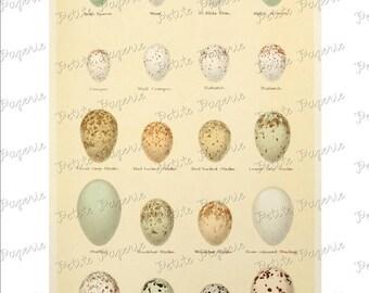 Bird Egg Digital Download Collage Sheet E