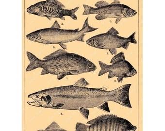 Vintage Fish Digital Download Collage Sheet