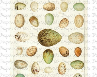 Egg Digital Download Collage Sheet