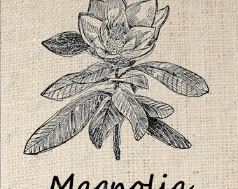 Magnolia Flower Iron on Transfer Digital Download
