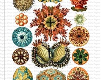 Haeckel Sea Life Digital Download Collage Sheet