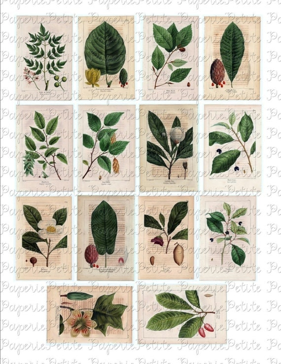 Botanical Leaves and Flowers Digital Download Collage Sheet A