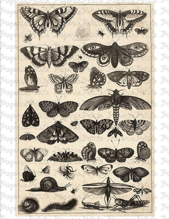 Black and White Butterflies Digital Download Collage Sheet