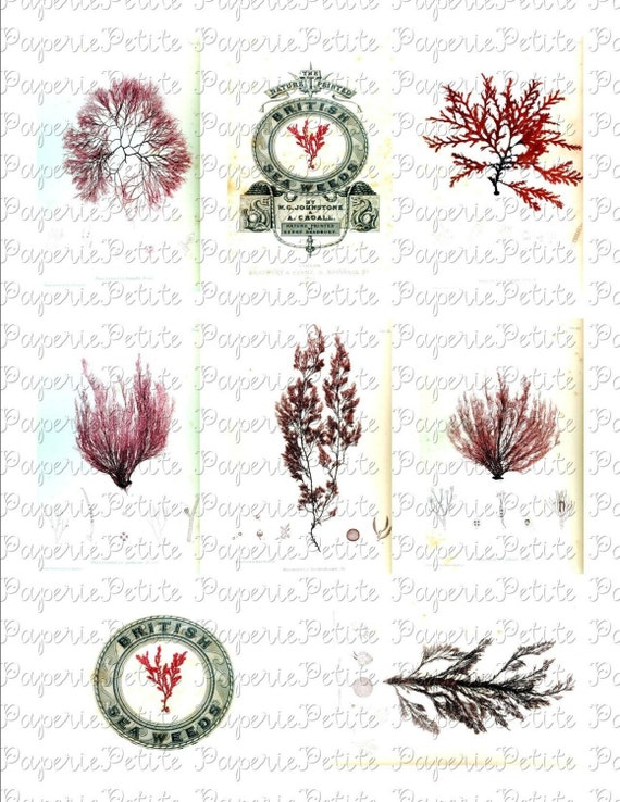 Seaweed and Coral Digital Download Collage Sheet