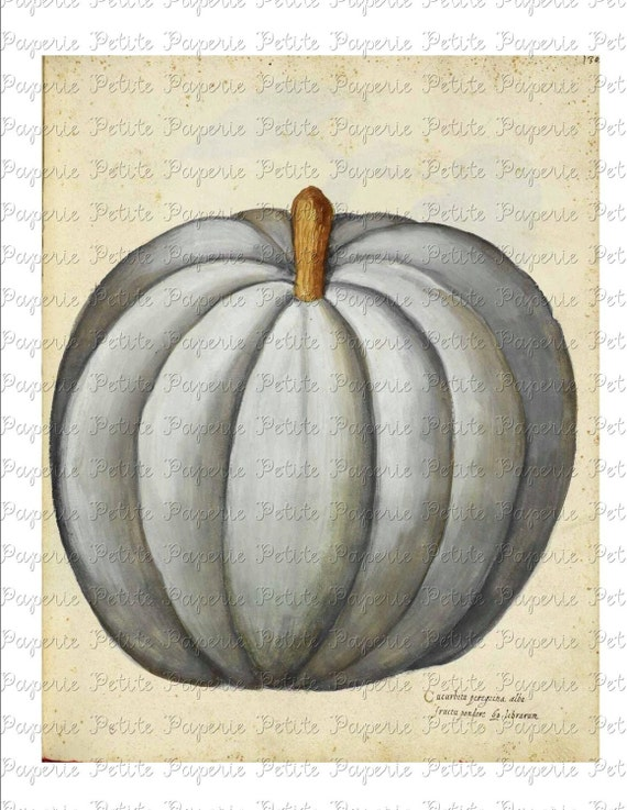 White Pumpkin Digital Download Collage Sheet