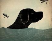 Summer Swim - Black (Red, Yellow, Brown too) Dog giclee print LABRADOR RETRIEVER