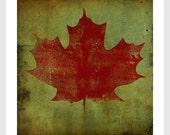 MAPLE LEAF graphic art  print by Native Vermont Ryan Fowler signed