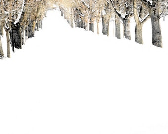 Winter Road Tree Lined Snowy Trees Snow White Wintery 11x14 Colorado Rustic Cabin Lodge Photograph