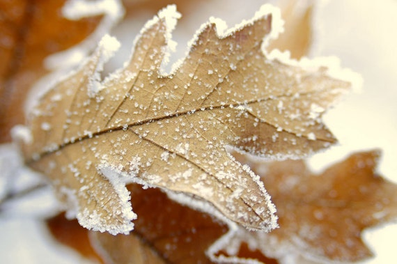 Leaf Icy Crystals Frosty Leaves Frosted Woodland Iced Forest Tan Rustic Colorado Winter Cabin Lodge Photograph