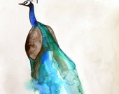 50% Off SALE - Bird Art - Peacock - 11x14 Giclee Print - Wall Art - Watercolor Painting