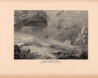 1900 underwater OCEAN SCENE print original antique sea life lithograph - the world of the sea - lobster crab jellyfish seaweed coral