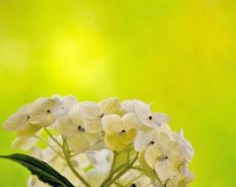Sunny Hydrangeas Bouquet fine art print, yellow wall decor, nature prints, still life, home decor, flowers, floral wall art