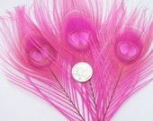 CANDY PINK Peacock Feather Eyes (12 Feathers,2 size option) Pristine peacock feathers boutonnieres,earrings,bouquets, costume millinery -R