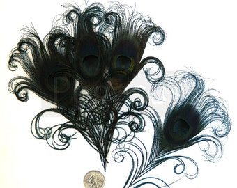 BLACK Curled Peacock Feather Eyes (4, 6 or 12 feather, 2 size option) feathers for wedding invitations,bouquets,center piece,millinery