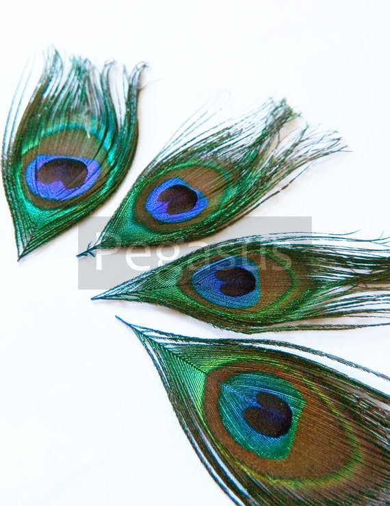 Small Natural Peacock (3 package size options) peacock eyes for appliques,wedding invitations,millinery fascinator,derby cap,earring