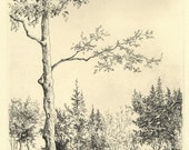 original etching of woodland path and tree