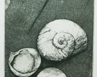 Original Fine Art eEtching 3 shells
