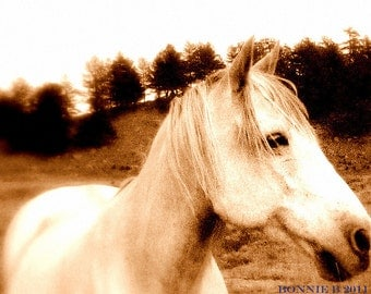 "White Horse photograhy  sepia brown oatmeal natural Horse portrait 5"" x 7"" Fine Art  metallic photo -Horses Dream Too"