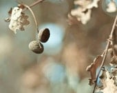 Acorn Print, Fall, Rustic Decor, Brown, Blue, Beige, Nature Photography, NYC Art, Oak, New York Print
