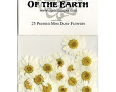 Mini Daisy Pressed Flowers - pack of 25  1 inch diameter yellow center white petal (great for iphone art)