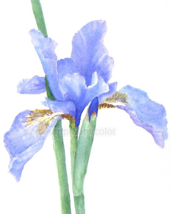iris watercolor painting archival print