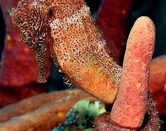 Seahorse Decor ~ Seahorse Art ~ Underwater Photography print of an Orange Seahorse