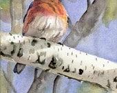 Eastern Bluebird - Open edition print of an original watercolor (fits 11x14 frame)