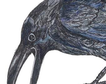 Raven Tell Corvid Drawing