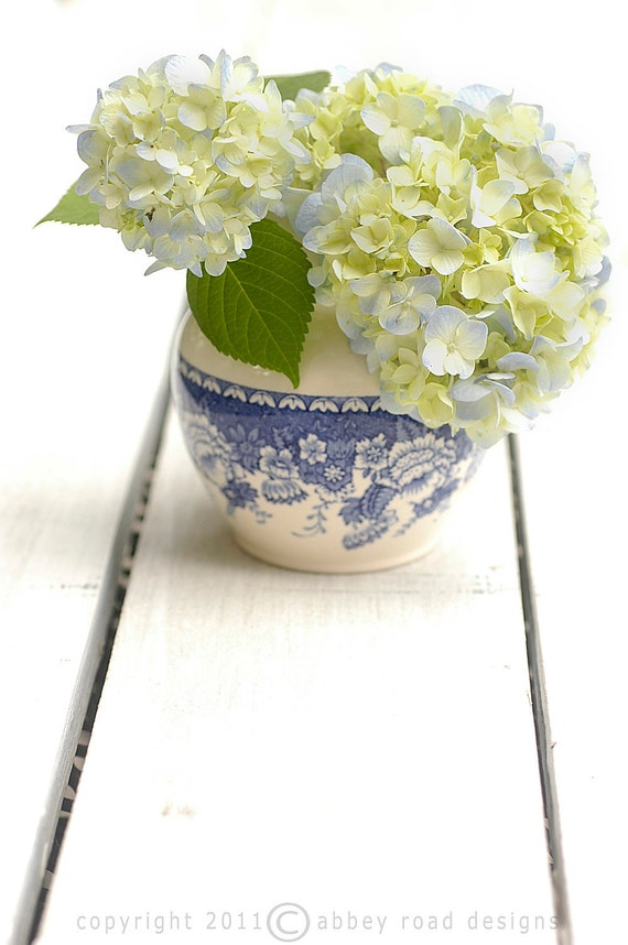Fine art photography, flower photography, floral, hydrangea, blue and white, 8 x 10, photograph